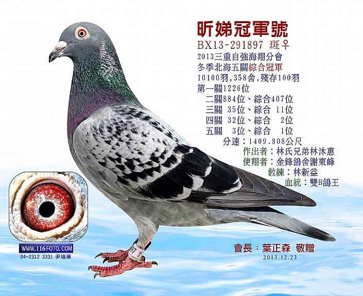 林氏兄弟鸽舍战绩丰硕的鸽界强豪